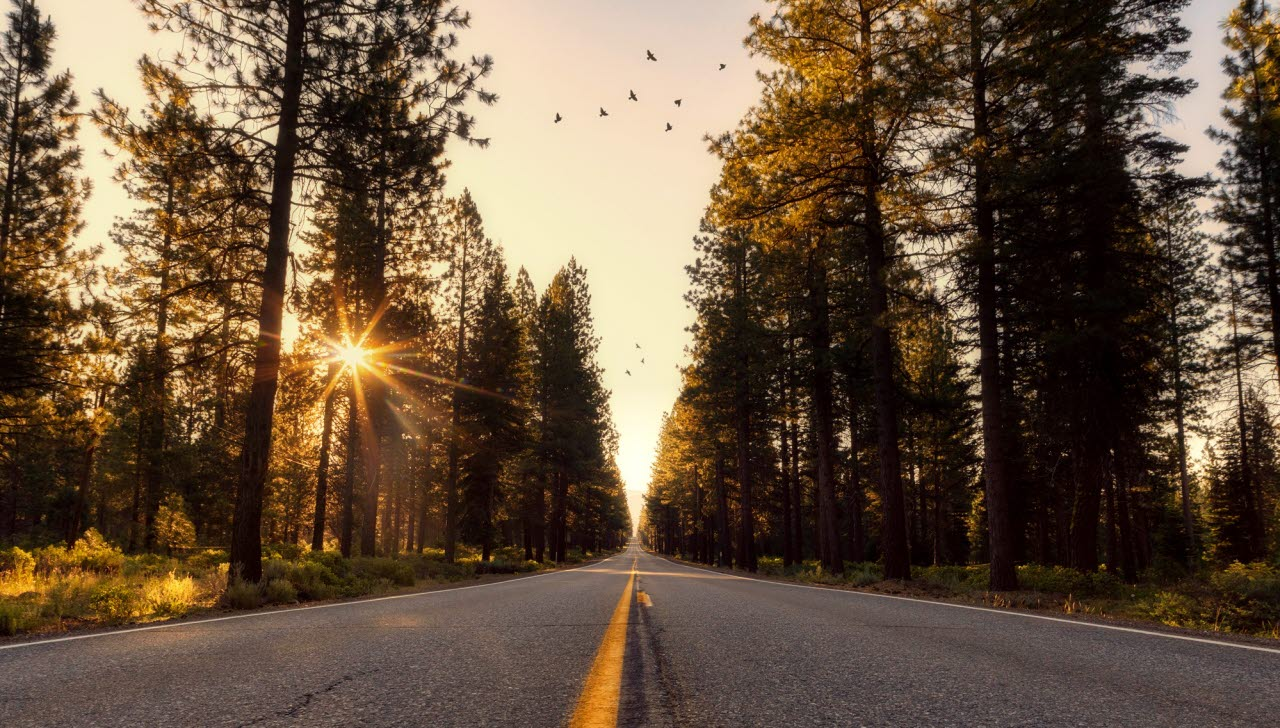 California-forest-rural-Pexels