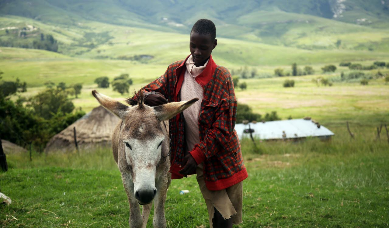 African farmer, Lesotho