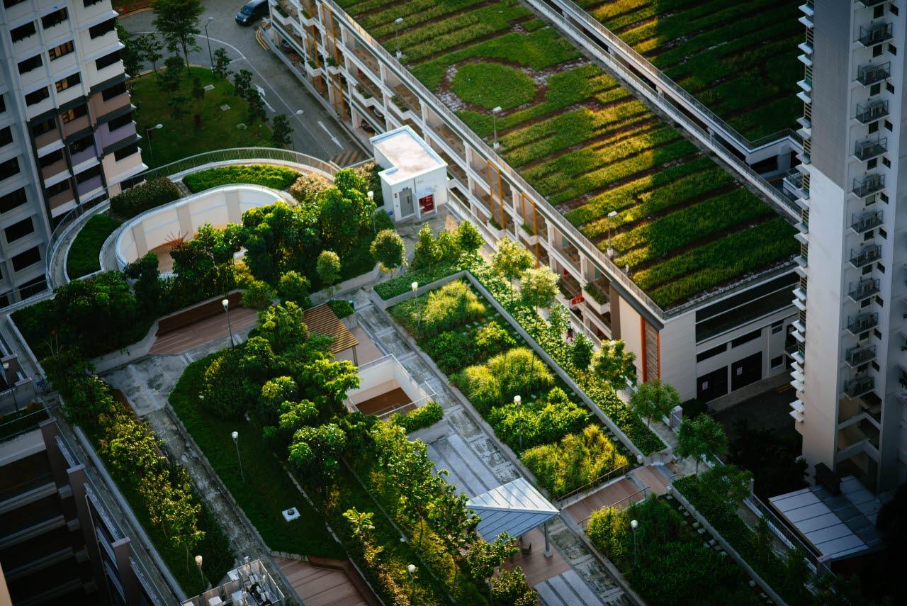 city-farming-urban-unsplash