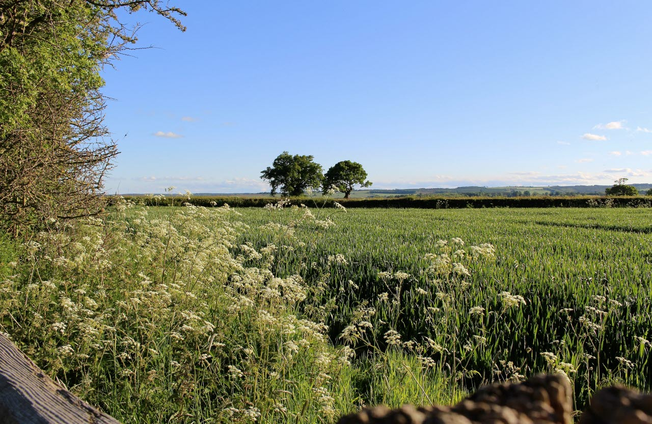countryside-rural-landscape-uk-pxhere