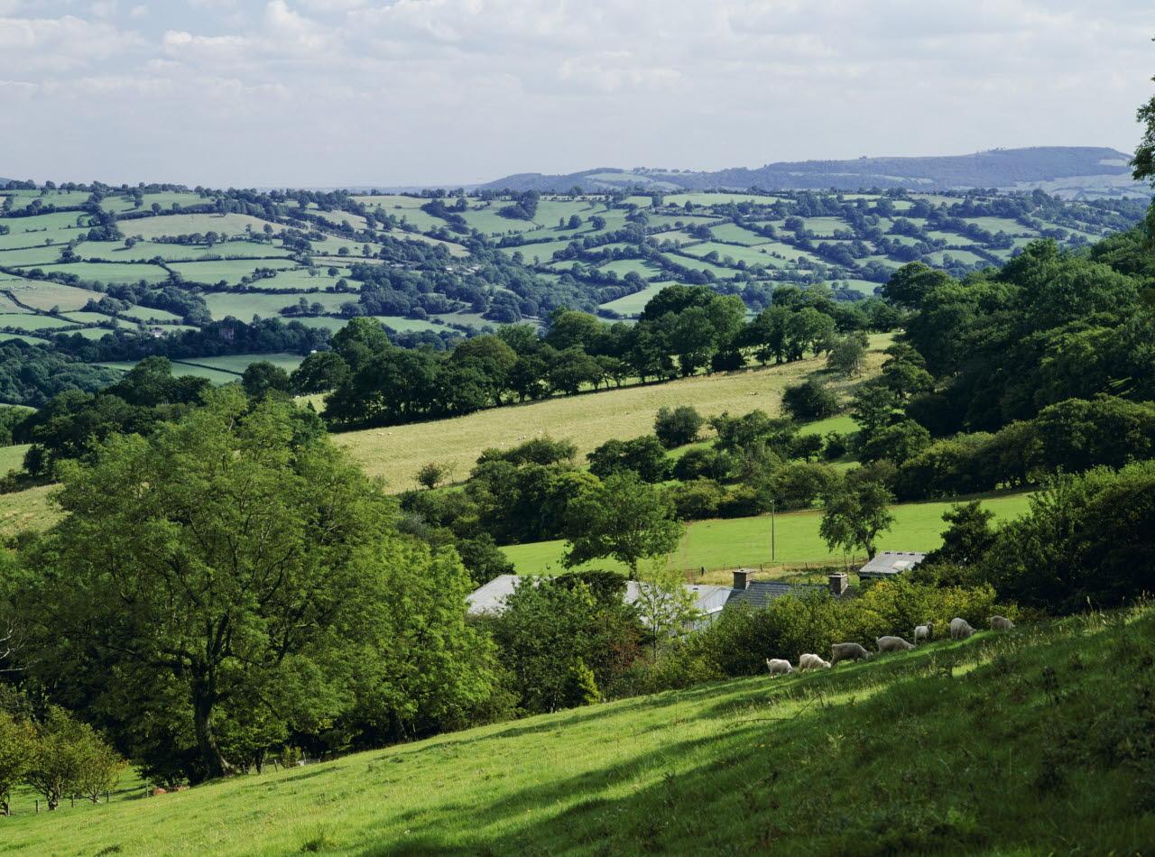 Rural-landscape-UK