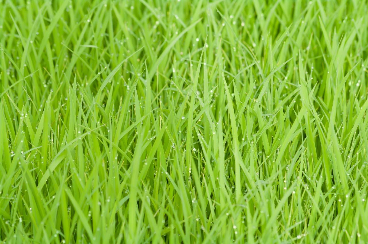 green-grass-pexels